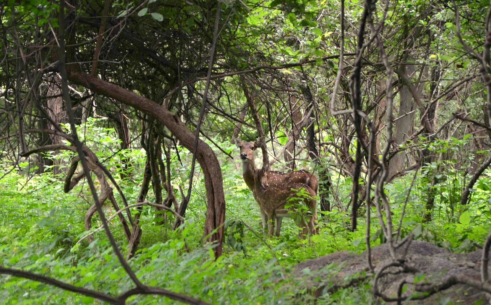 Balphakram National Park, Meghalaya, North East India