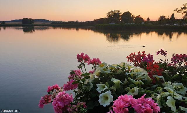 Flores en un lago al anochecer
