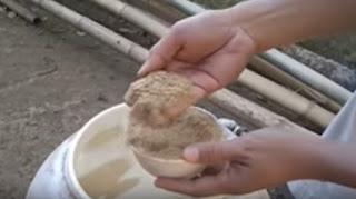 Pakan Ayam Petelur Hemat dan murah