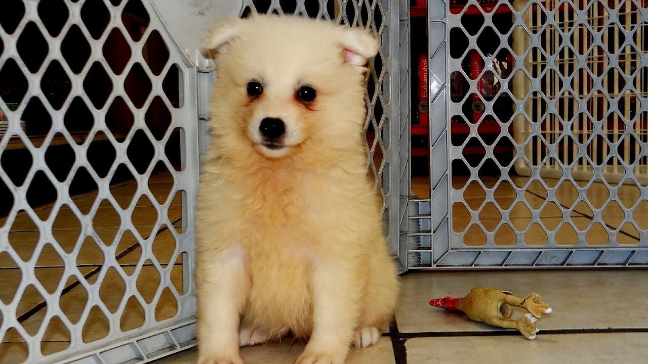 Craigslist Pets Fort Smith Ar - Pet choices