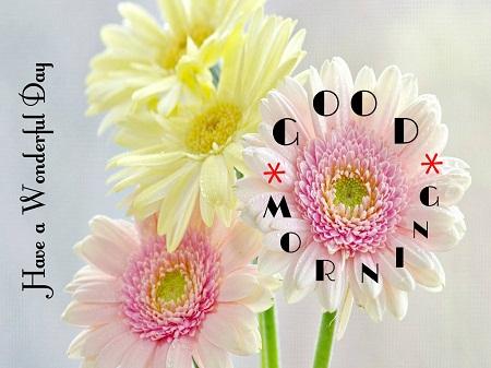 Sweet Good Morning Images of Flower