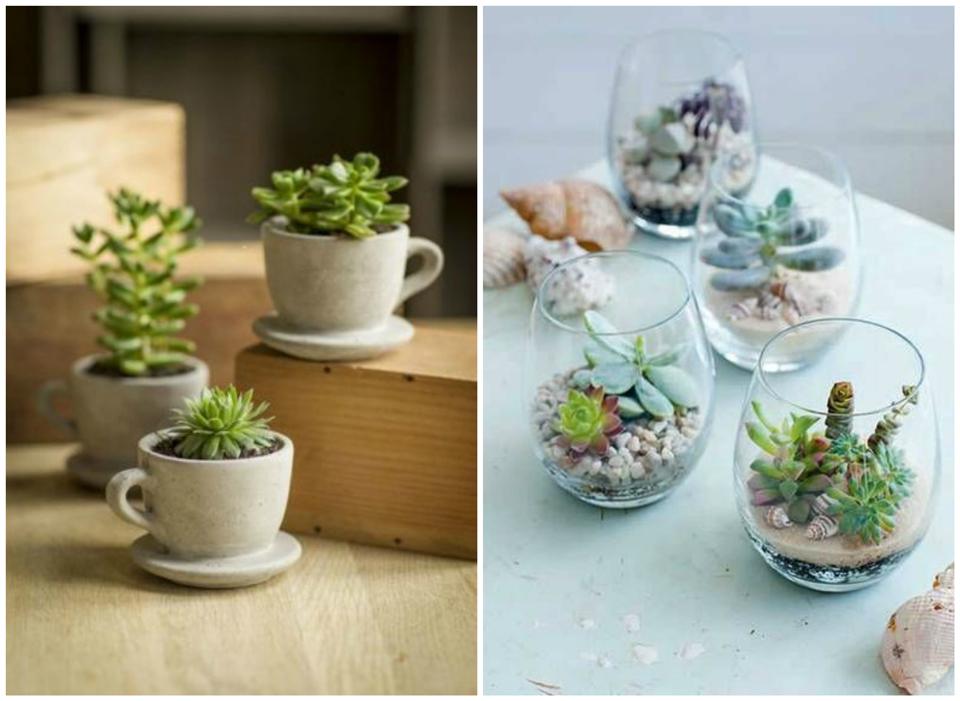 Déco: Avec plantes succulentes
