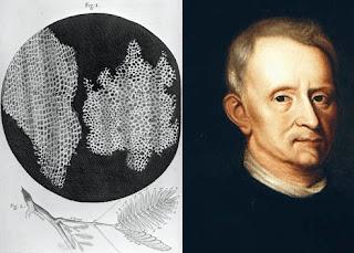 Sel gabus hasil pengamatan Robert Hooke