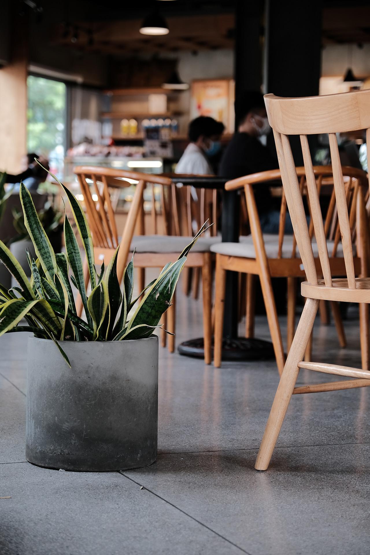 rencana bisnis untuk tempat teh hijau