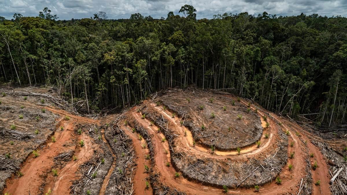deforestrasi di Indonesia