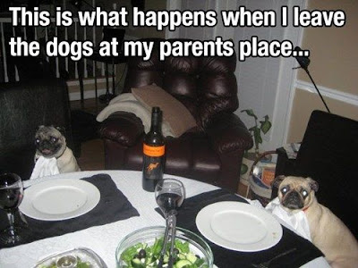 dogs at table, dogs dinner, dog meme, funny dogs