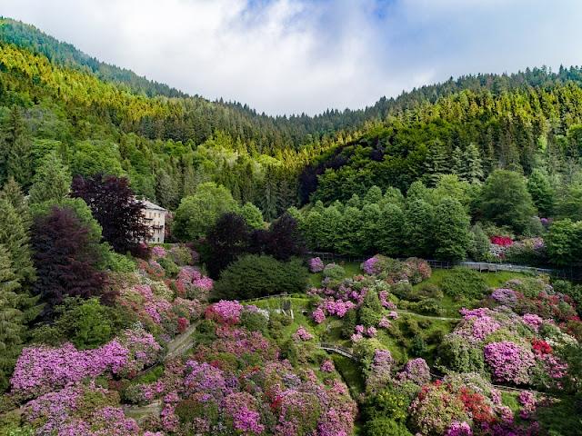 Oasi Zegna conca dei rododendri