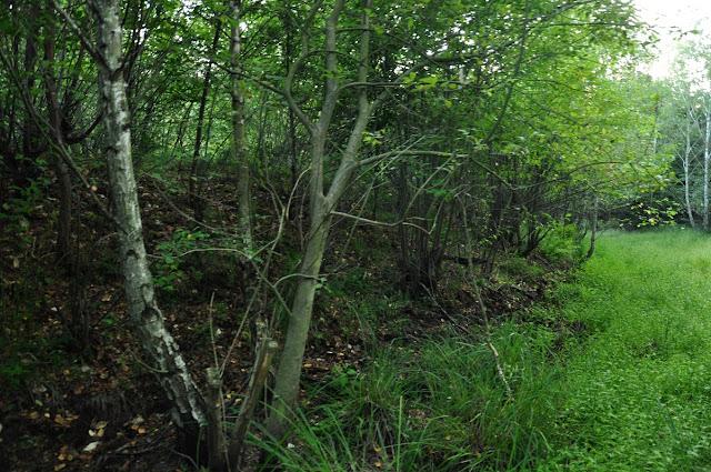 Wczesnośredniowieczne grodzisko pierścieniowate we wsi Mieszkowo