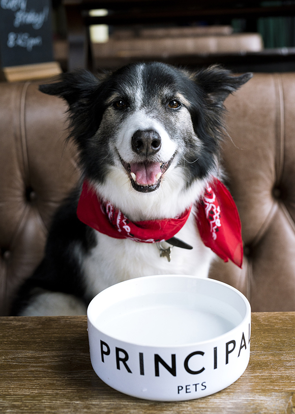 Bacon on the beech: Dog Friendly Manchester
