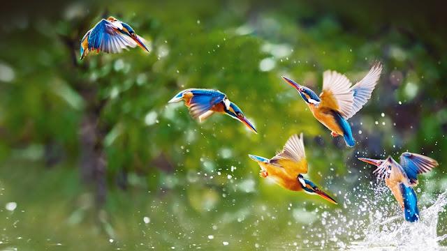 प्रकृति पर कविताएँ हिंदी में