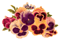 flowers pansy image illustration transfer digital download clipart