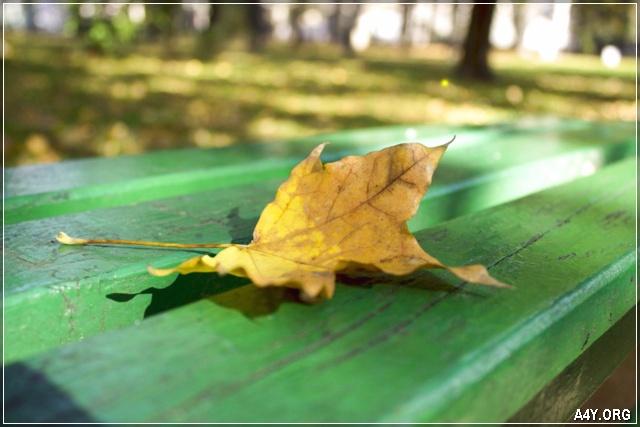 chiếc lá vàng cuối tháng 9 rơi trên ghế