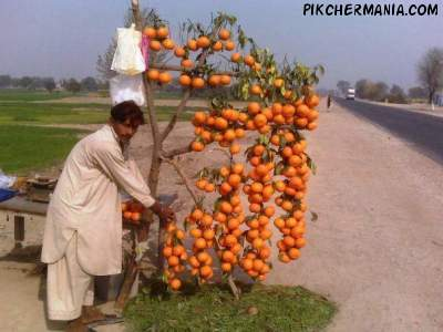 creative display of orange fruit by pakistani fruit seller