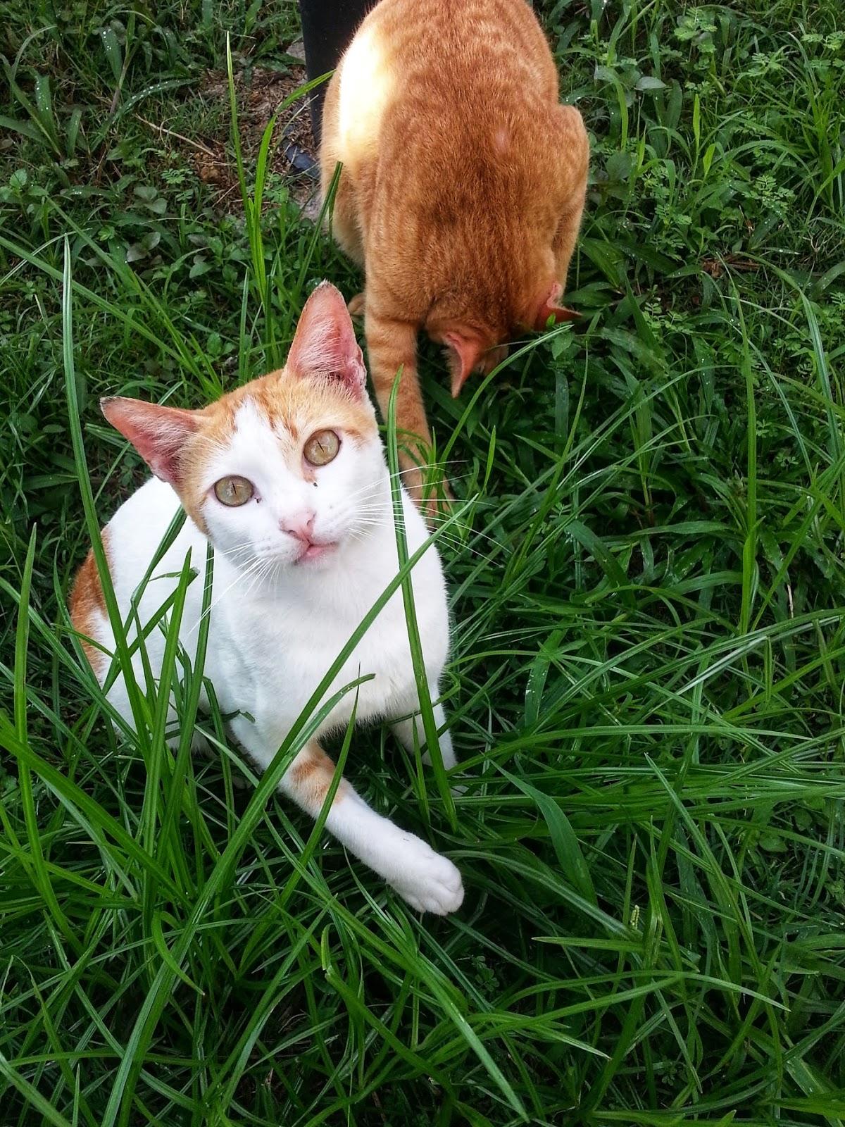 Mengenang Kucing Kesayangan Kami Opet & Oyen 3