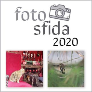 Fotosfida 43
