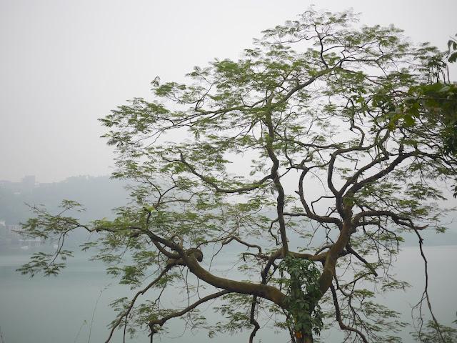 tree at the Changjiang Reservoir (长江水库) in Zhongshan, China
