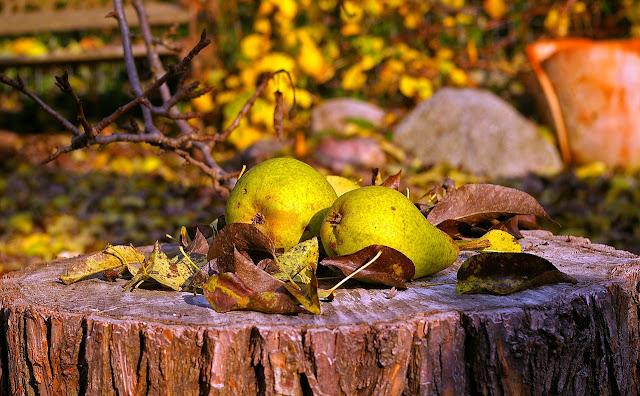 confiture de poires aux citrons et oranges