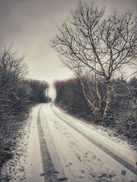 Snowy Connemara landscape, road, trees