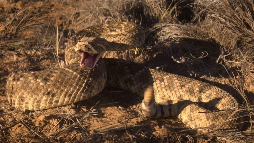 «Гремучая змея» - в чём смысл сюжета и концовки, что показывают в финале