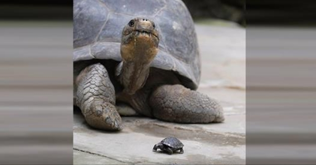 80-Year-Old Tortoise Becomes A First-Time Mom