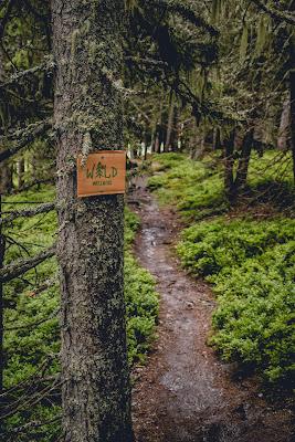Waldwellness-Weg Saalbach | Regenwandern im #HomeofLässig | Waldbaden in Saalbach 11