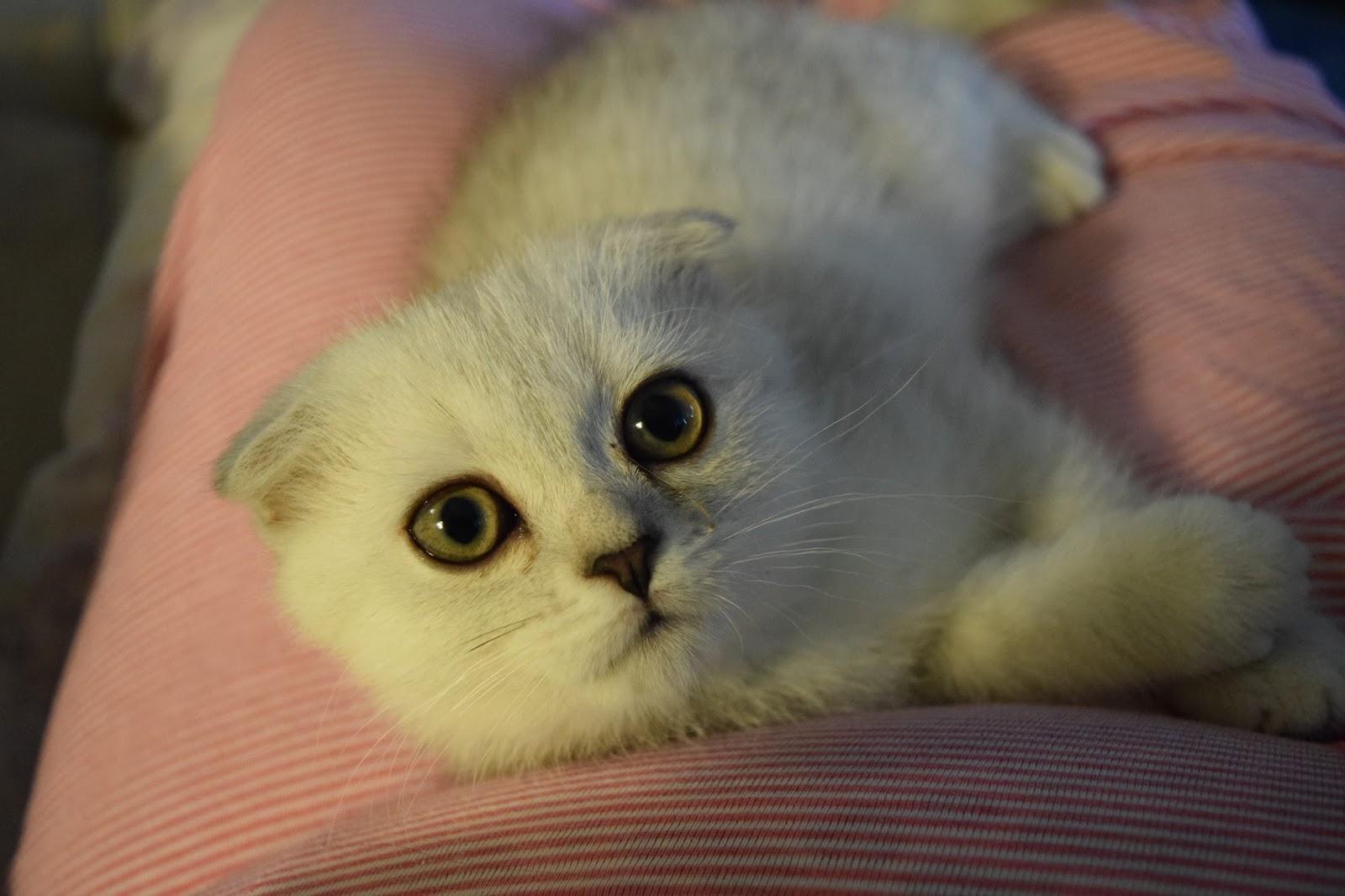 kittens at 6 weeks