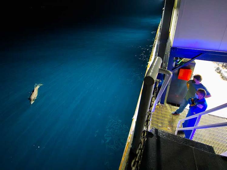 Golfinho é flagrado antes de amaragem da cápsula da SpaceX