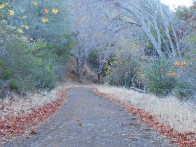 kindling, path, spiritual path, mt diablo hike