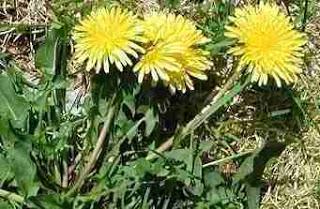 Τα αγριοβότανα και η σημασία τους για το έδαφος