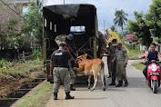 Pol PP Amankan 4 Ekor Hewan Ternak Yang Berkeliaran Ditempat Umum