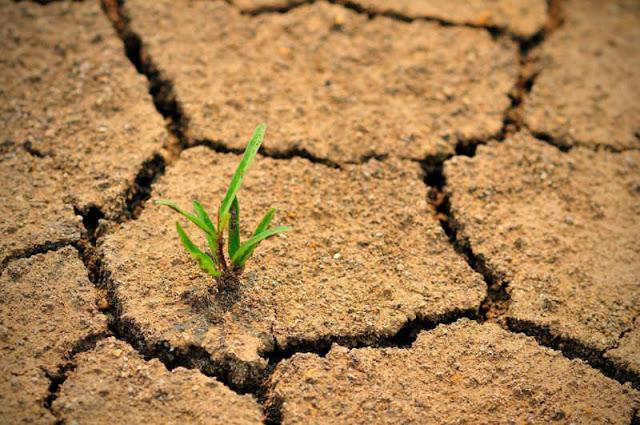 معلومات حول حماية التربة