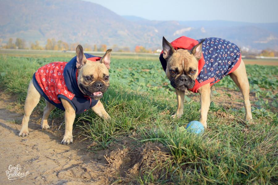 HUNDEBLOG GENKI BULLDOG : Selbstgenähte HundemäntelHundeblog Genki ...