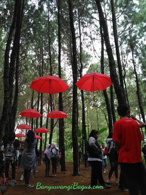 Spot selfi dibawah payung di hutan pinus Songgon.