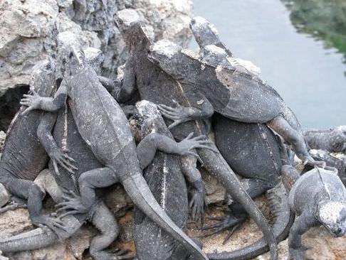 contoh hewan reptil