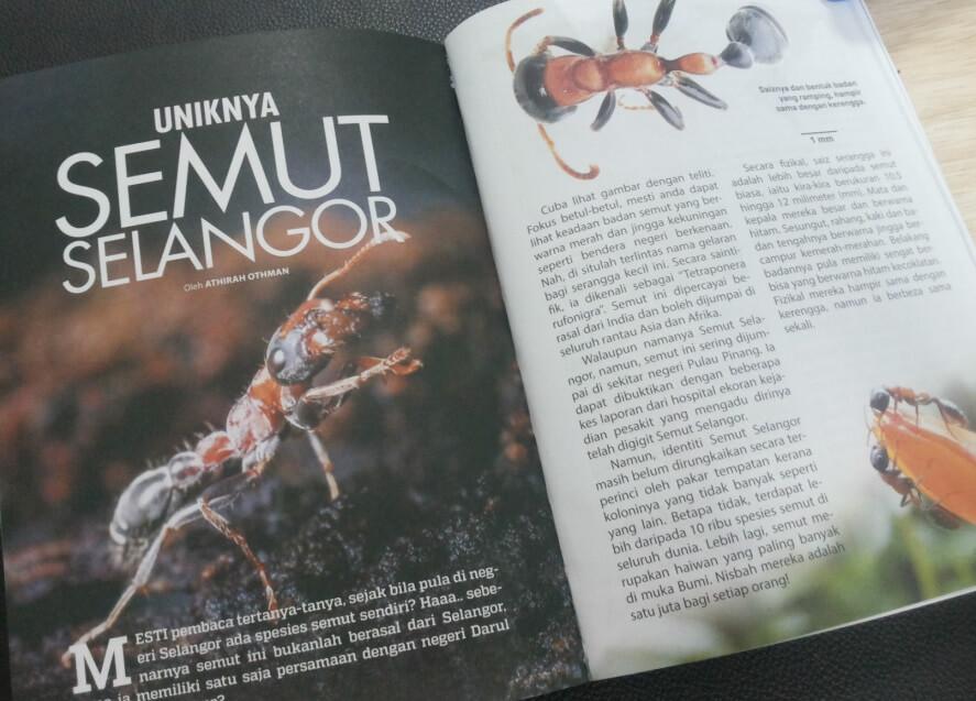 Semut paling berbisa