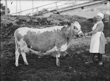 Nainen ja lehmä.