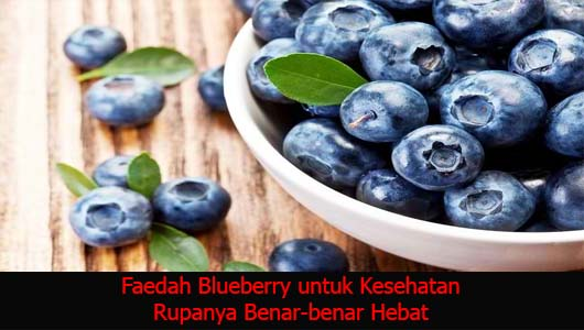 Faedah Blueberry untuk Kesehatan Rupanya Benar-benar Hebat