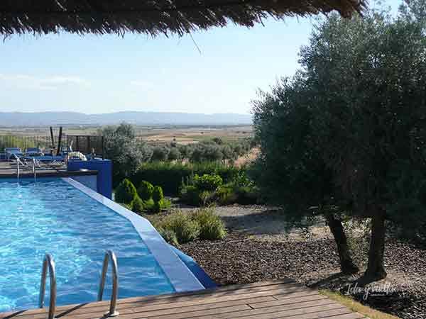 Piscina y mar de olivos en el Villa Nazules