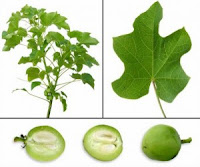 Read This ! You Must Know 10 Type Toxic Fruits - Healthy T1ps