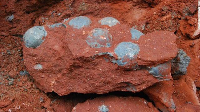 Gempar, Para Pekerja ini Terkejut Temukan Puluhan Fosil Telur Dinosaurus