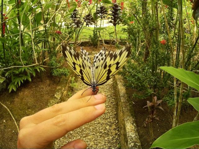 Ogród motyli Siquijor
