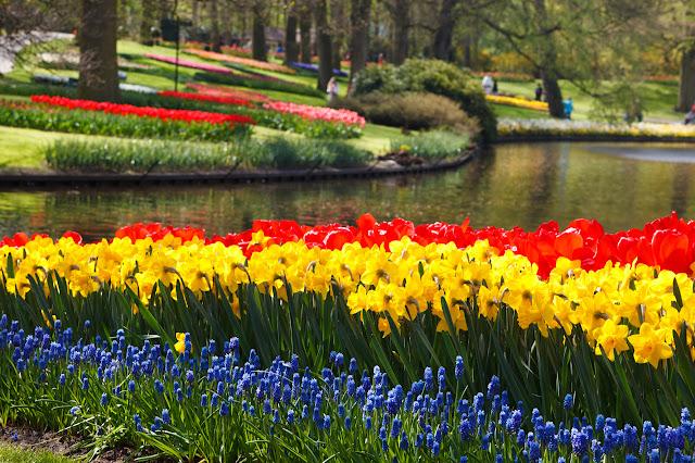 荷蘭庫肯霍夫花園 鬱金香