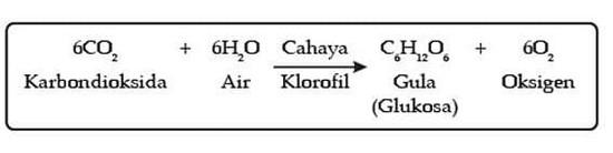 Gambar persamaan reaksi proses fotosintesis