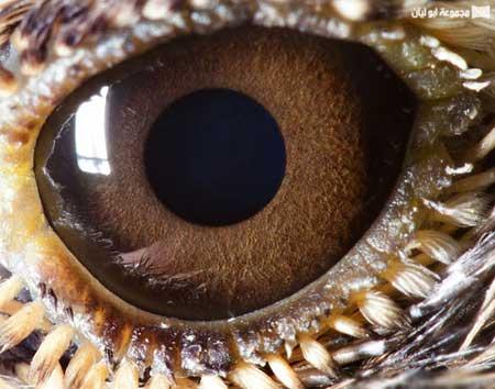 شاهدوا روعة التصوير لعيون حيوانات مقربة جدا 9.jpg