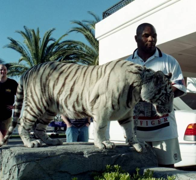 Myke Tyson and his tiger