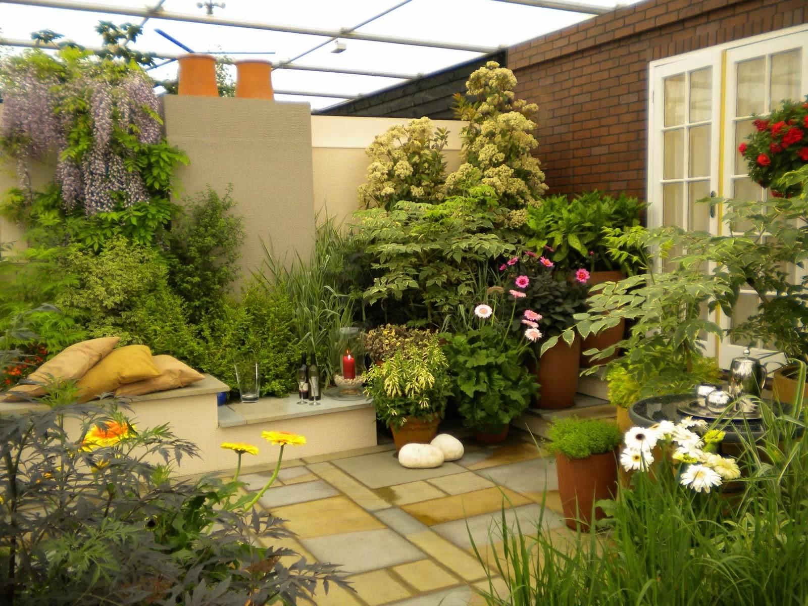 7 Tanaman Hias Untuk Taman Rumah Minimalis