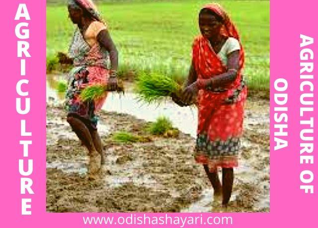 Agriculture in Odisha 2020