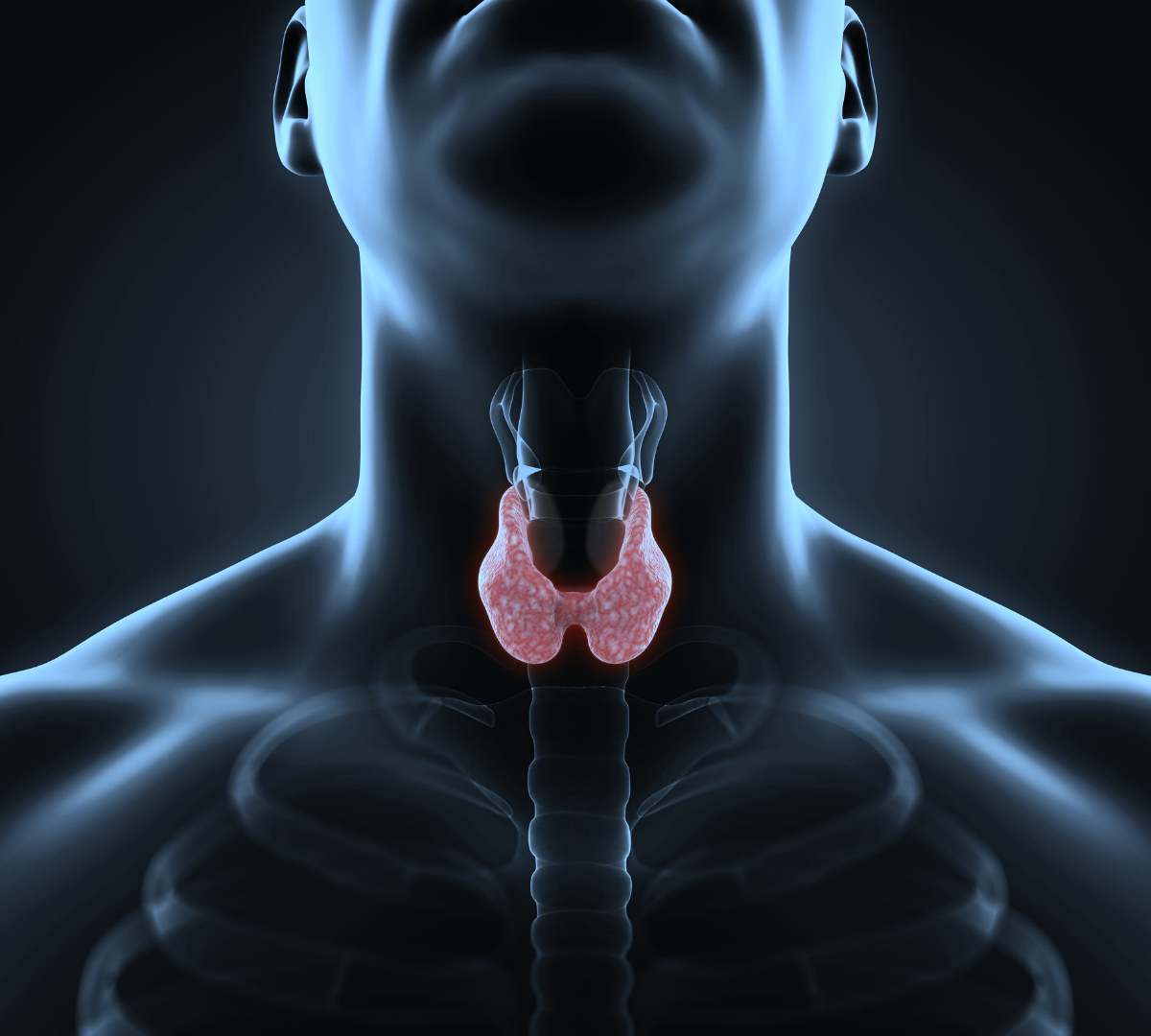 Multiple Choice Question On Thyroid Hormone Disorders And Function