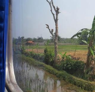 Persawahan, dijalur kereta api Sukabumi-Bogor