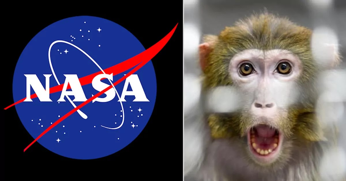 Anger After NASA Reveals That They Killed 27 Monkeys In A Day Because They Couldn't Find Them A Suitable Home